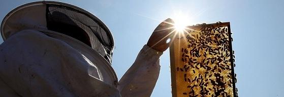 Νέος Μελισσοκόμος