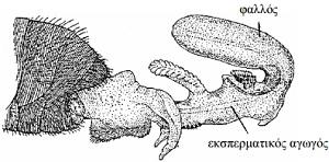 anatomia-melissa