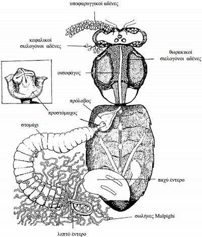 anatomia-tis-melissas