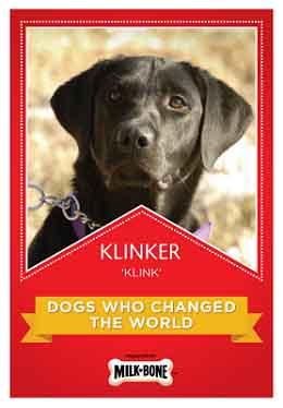 klinker-dog-bees