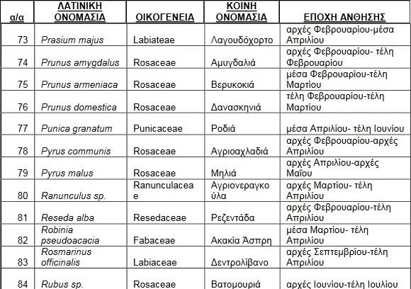 melissokomika-fyta-rodos7