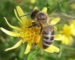 Μελισσοκομικός Συνεταιρισμός Άρτας